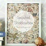 Simple seashell shadowbox