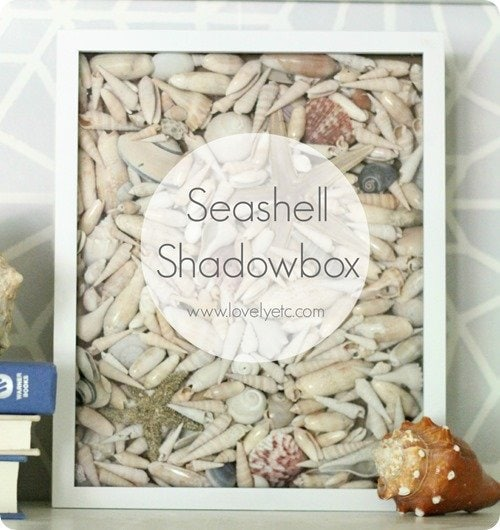 Simple seashell shadowbox