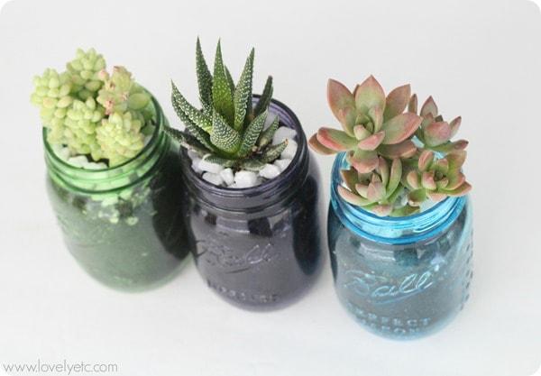 mason jar succulent trio 2