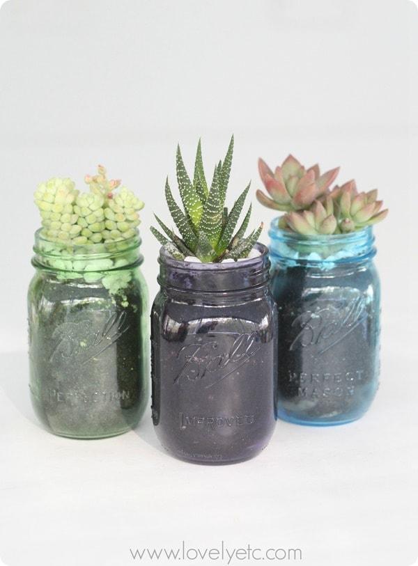 mason jar succulent trio 4