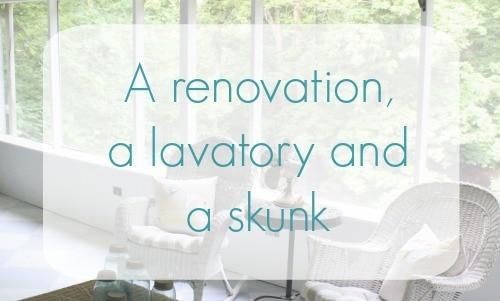 A renovation, a lavatory, and a skunk