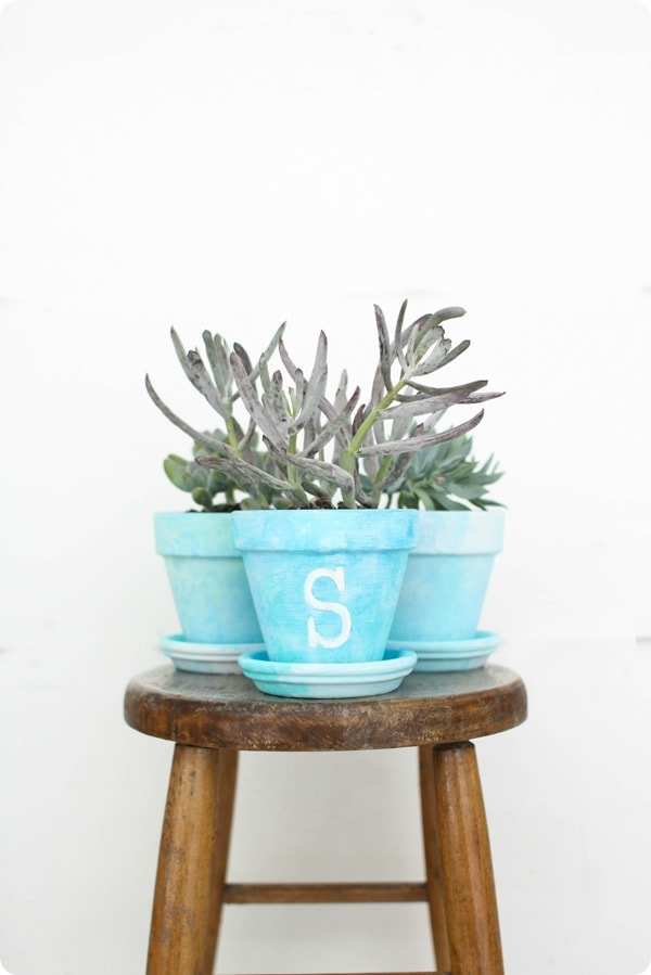 potted succulents on stool