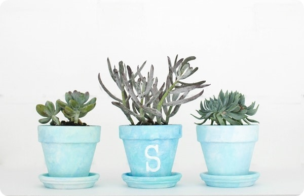 succulents in painted pots