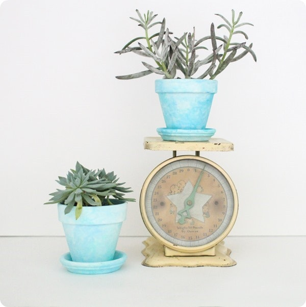 vintage scale and succulents