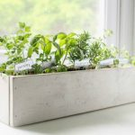 How to create a beautiful kitchen herb garden
