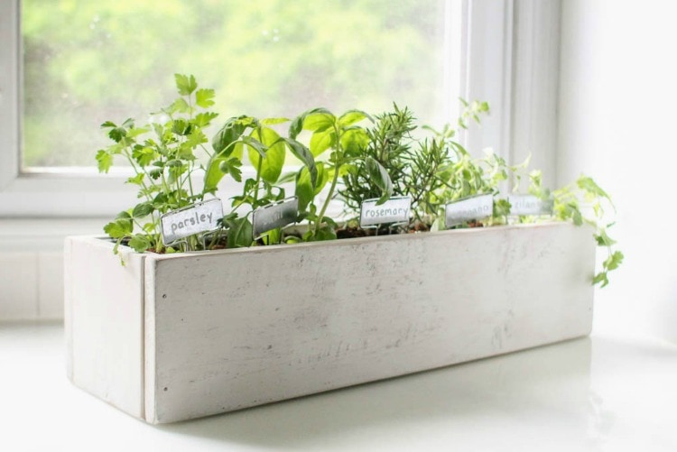 Beautiful Kitchen Herb Garden, Countertop Herb Garden