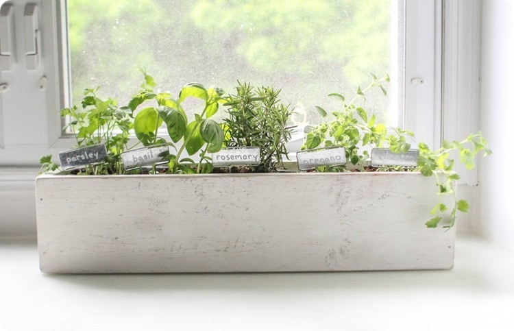 kitchen herb garden in diy planter box