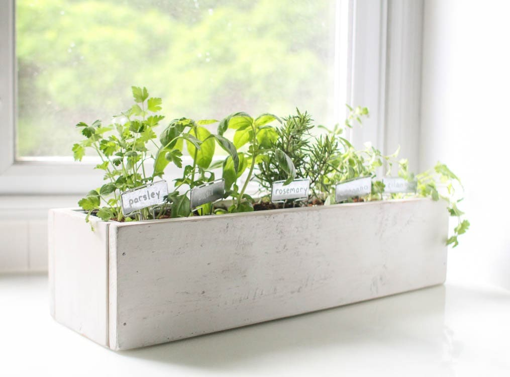 How to create a beautiful kitchen herb garden lovely etc for Kitchen garden plants