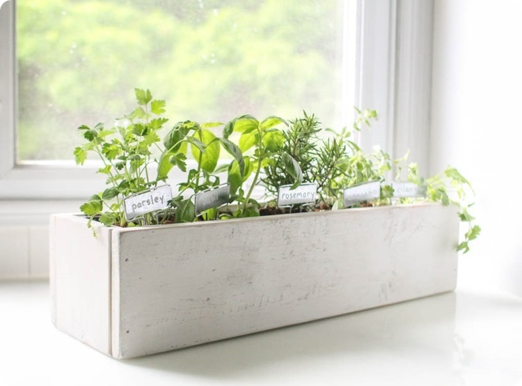 plant a kitchen herb garden