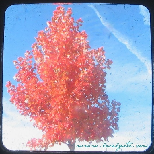 TTV red tree square