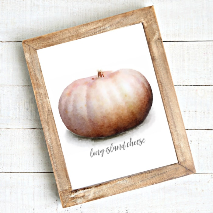watercolor pink pumpkin called 'long island cheese' in a frame
