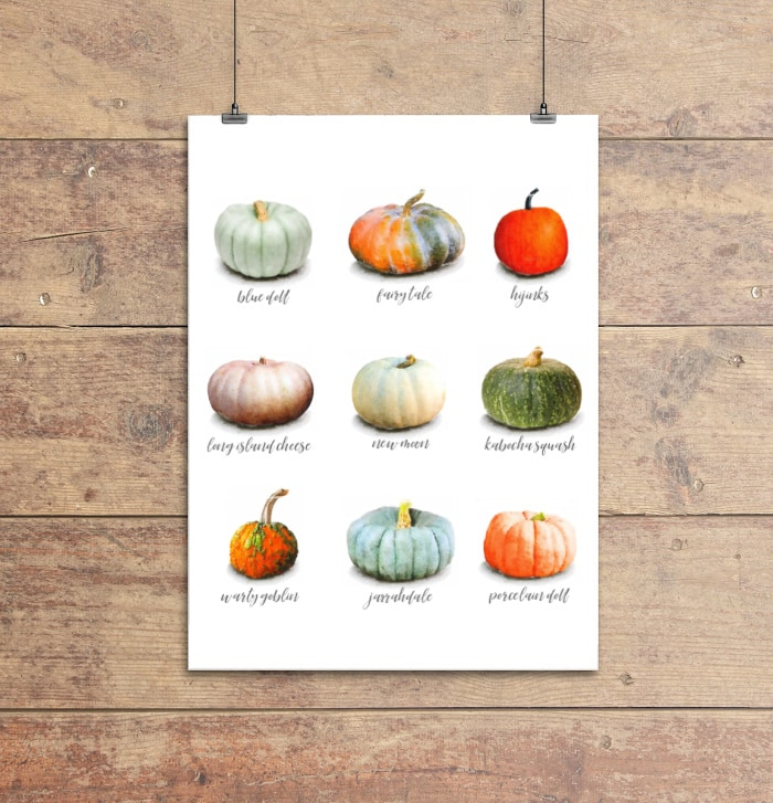 watercolor pumpkins specimen art printable with nine different pumpkin varieties