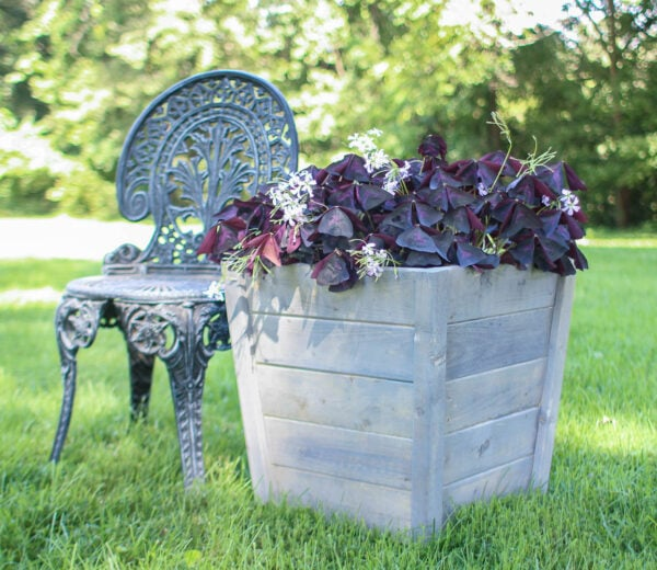diy wood planter box with gray finish and purple shamrock plant next to a garden chair.